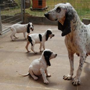 canil-sonar-cachorros1